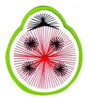 Coccinelle insecte bete bon dieu broderie papier loisir creatif eugenie patron modele rouge
